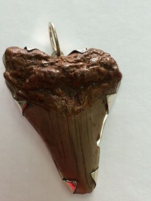 10 million year old Authentic Shark Tooth